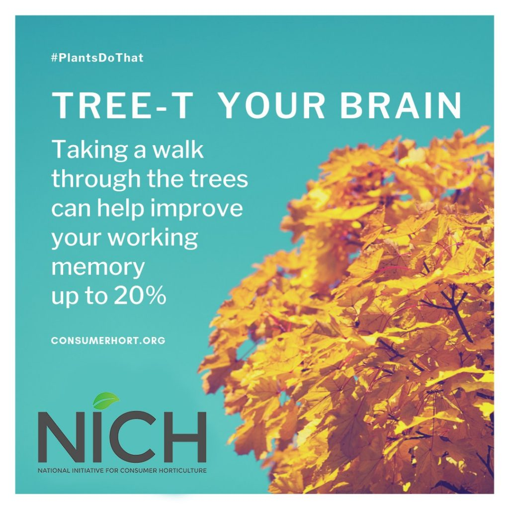 #PlantsDoThat - Treat Your Brain - Taking a walk through the trees can help improve your working memory up to 20%